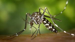 Santé : les pays sahéliens en rang serré contre le paludisme