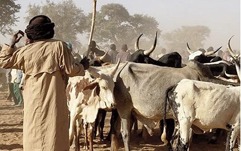 25 tués au marché à bétail de Kompienbiga: 48 heures infernales au Burkina Faso